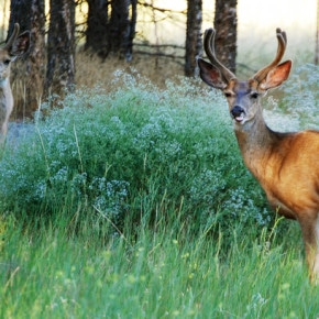 Buck numbers 'best in decades' for season opener