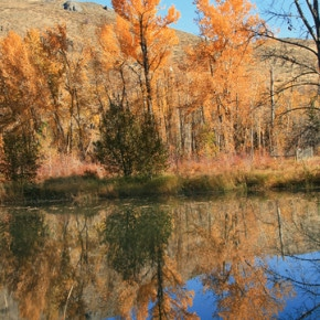 Autumn in the Methow 2013. By Marcy Stamper