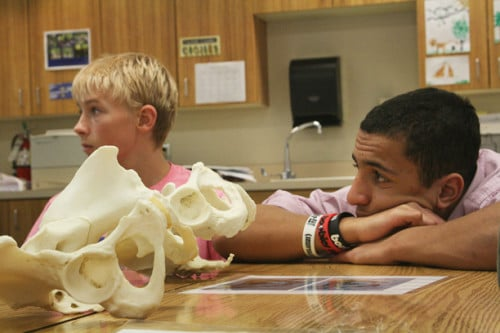 Nick Fitzmaurice and Mason Johnson, seventh graders in the medical detectives class, learn about measuring and identifying human and animal bones.