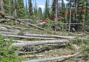 View from trail looking East at edge of avalanche. Arrow denotes location of skis. Photo courtesy USFS