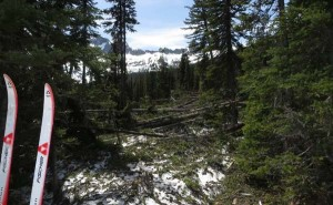 Location 2: View from trail looking West as you approach the avalanche from the East. Photo courtesy USFS
