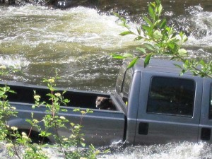 Jessie stayed in the pickup truck's bed while awaiting rescue. Photo by Don Nelson