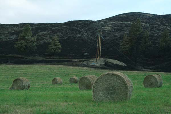 In some areas, including this hayfield on the Loup, there was an eerie contrast between irrigated areas that didn't burn—and dry areas that did. Photo by Marcy Stamper