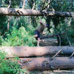 Downed trees litter the Big Valley Trail. Photo by Laurelle Walsh