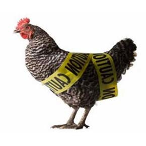 Two avian influenza quarantines lifted in Okanogan county