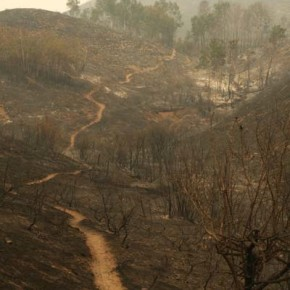 Reports on severity of burn damage, erosion threats due next month