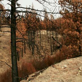 DNR proposes salvage logging in 1,285 acres of  Carlton Complex Fire's burn area