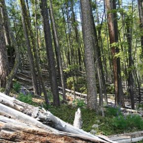 Conservation group raises concerns about proposed Wolf Creek logging