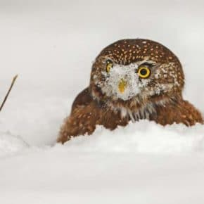Conservancy hosts holiday party, photo program on North America's owls