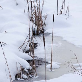 Snowy security blanket.   Fresh snow this weekend provided an enveloping layer of warmth for the beavers that inhabit this pond near Sun Mountain. Signs of other wildlife were also evident on the Sun Mountain ski trails, including moose and snowshoe hare. Photo by Marcy Stamper