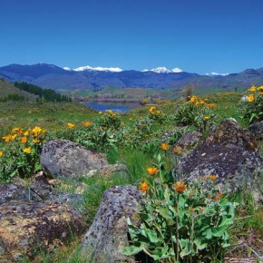 Photo by Laurelle Walsh A gorgeous spring view near Pearrygin Lake.