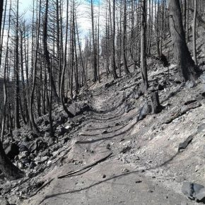 Diamond Creek Fire assessment identifies long-term damage to trails, soil, streams