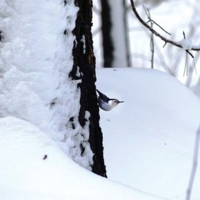 Observers verify 66 species in annual bird count, including some rare sightings