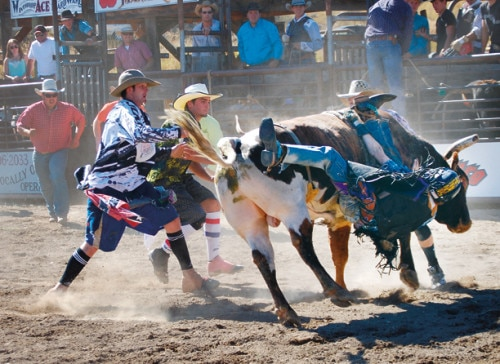 Payton Torrez, 17, of Zillah, was temporarily  hung up while bull riding, but walked away. Photo by Dana Sphar