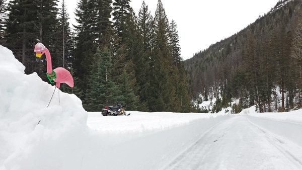 Pink Floyd, the avalanche safety flamingo, points out hazards along the route for the clearing crew. Photo courtesy WSDOT