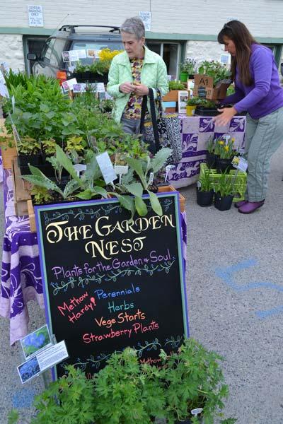Maryann Kirkland browses garden starts.Photos by Laurelle Walsh