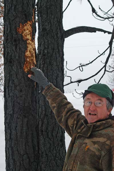 Ken Bevis is creating wildlife habitat in the charred trees on his Rising Eagle Road  property. Areas of missing bark on burned trees show where beetles and woodpeckers are taking advantage of the changes brought by fire. Photo by Ann McCreary