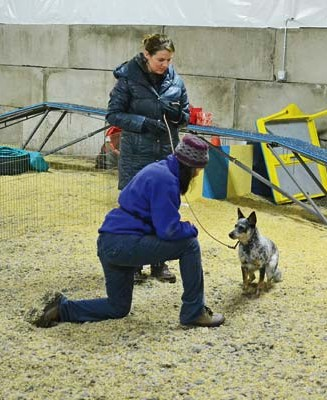 Wasson, kneeling, coaches Geva Maher and her cattle dog, Scout, in puppy obedience skills. Photo by Laurelle Walsh