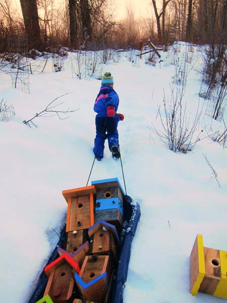 Five-year-old Posey Hannigan pulled a sled full of Nice Nests through the snow on the way to installing 22 nest boxes at Twisp Ponds in February.