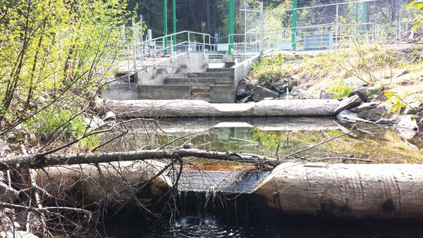 Photo courtesy of Methow Salmon Recovery Foundation The large fish screen structure below the MVID headgate was demolished and removed last month, and channels were created to allow fish to move through floodplains back to the river.